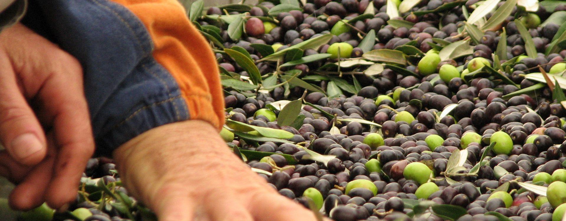 olive oil tasting goriska brda