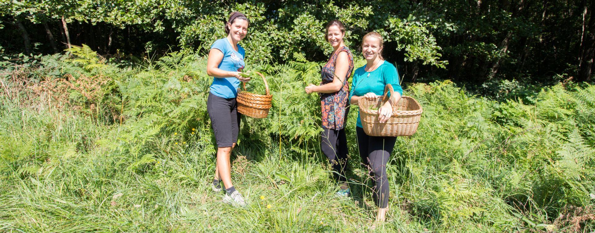 herbal walk soca valley