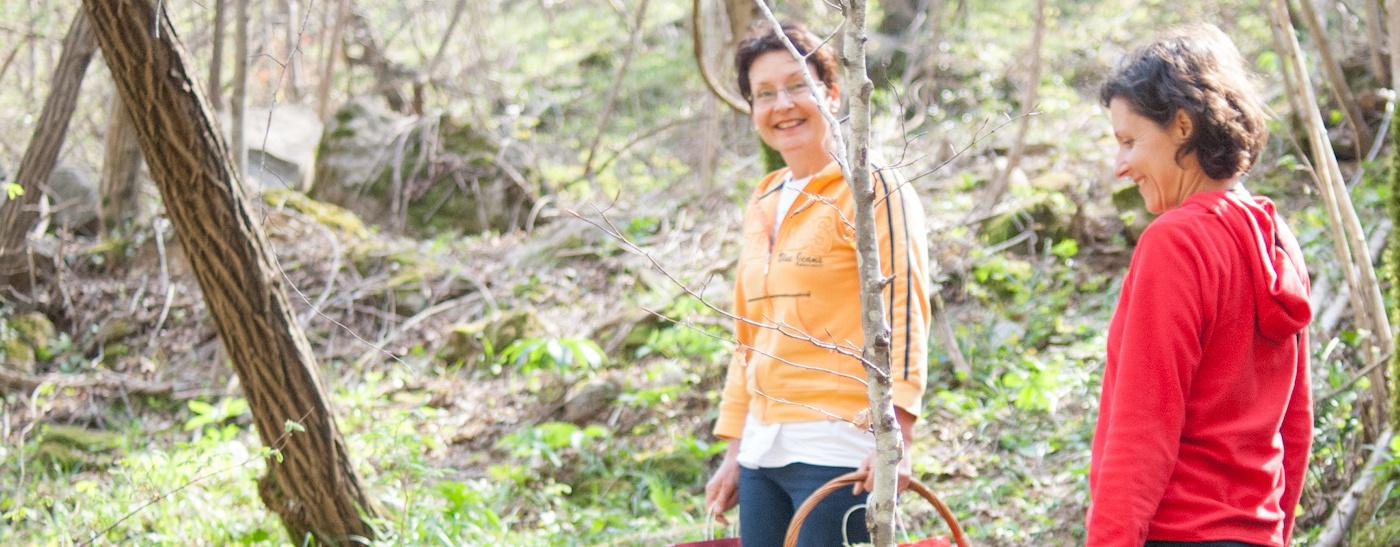 herbal walks soca valley